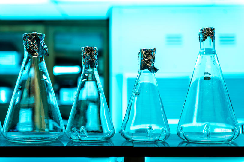 Four beakers lined up on a table in a lab.