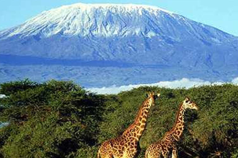 Summit Mt. Kilimanjaro: Join Team Fox on an Expedition to Reach the Top of Africa